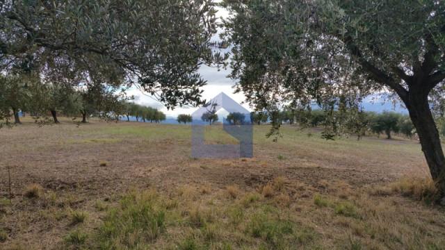 (Italiano) Lanciano: terreno ideale anche per serra.